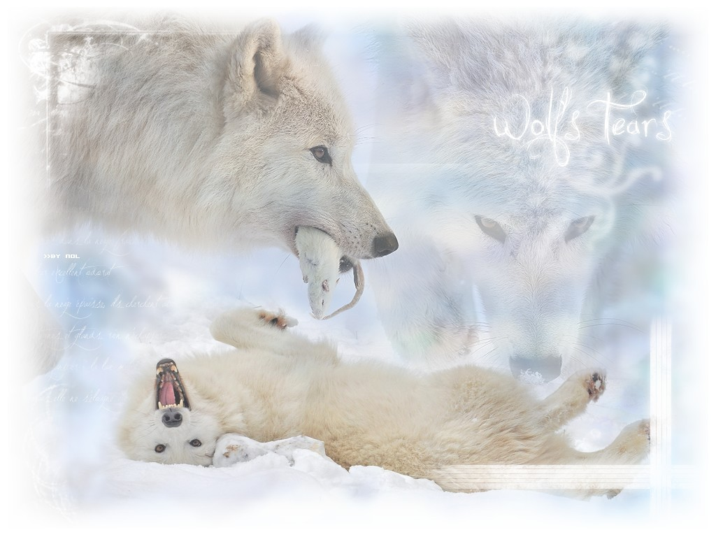 Loups Wild