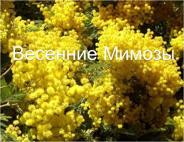 Форум жителей жилого квартала Радужный