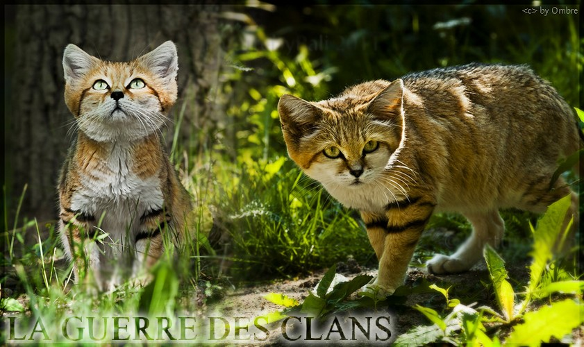 Le Clan de la Forêt Verdoyante.