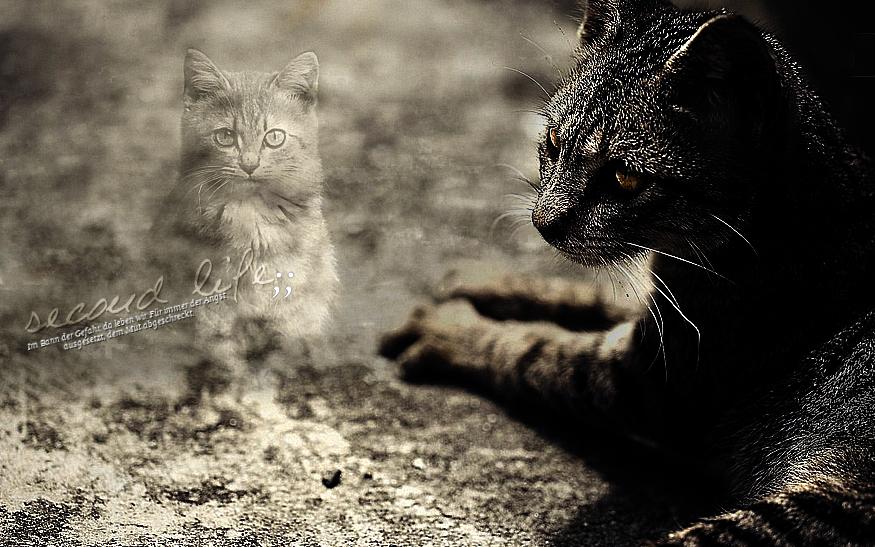 Die Katzen der Nacht