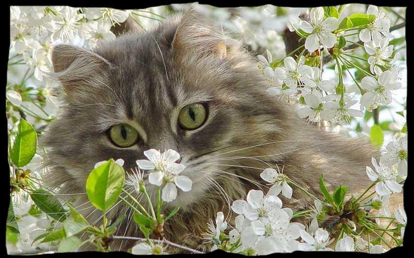 Коты-воители ролевая