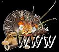 http://voyancependulejm.forumgratuit.org