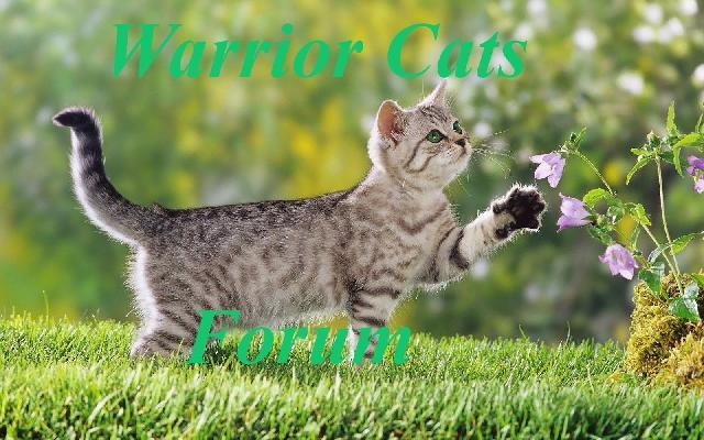Haustiere Katzen Hunde und mehr