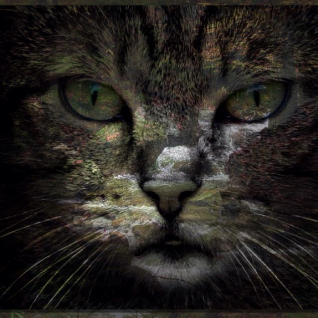 Ahornkatzen