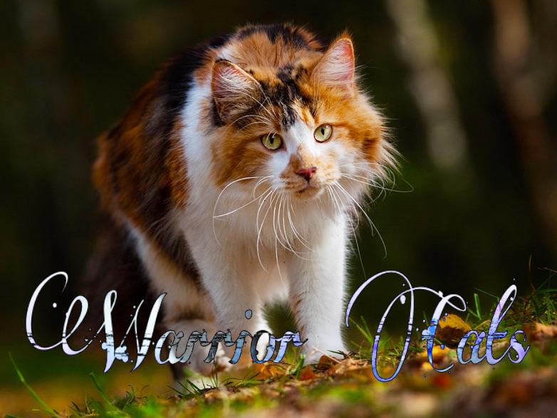Warrior Cats - Das Schicksal der Clans