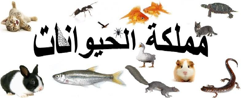 كيفية صيد الحيوانات الطيور والاسماك .الخ