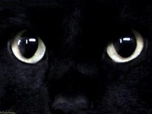 Черная Графиня