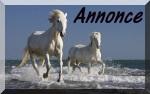 Annonce